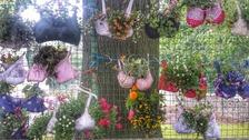 Hanging 'braskets'.