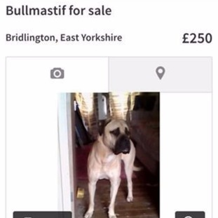 Prince was stolen and then put up for sale on Gumtree