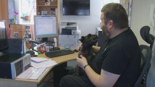 Charity urges more companies to allow dogs at work