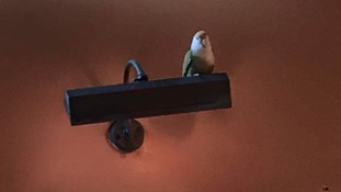 Polly want a pint?: Parrot left behind in Bradford pub