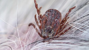 Ticks were found to be present across the UK