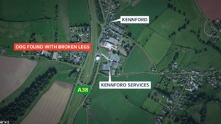 The King Charles Spaniel was found injured on the A38 near Kennford Services on Thursday afternoon.