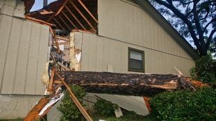 A huge pine tree was felled through a home in Tallahassee.