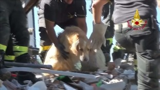 Dog found alive in Italian earthquake rubble after nine days