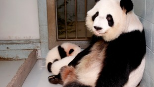 Panda twins born at American zoo