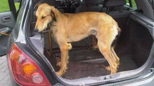 Dogs seized and three arrested during police clampdown on hare coursing