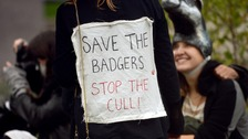 Protesters demonstrate against the badger cull