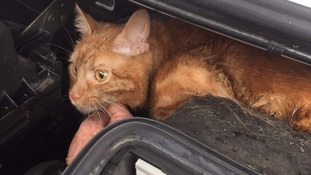 Lost cat hides in engine of removal van and is taken 60 miles from north London