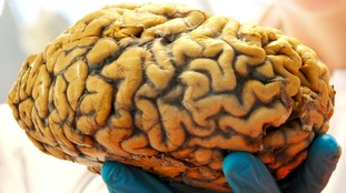 No such thing as a male or female brain, neuroscientist claims