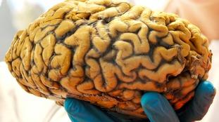 No such thing as a male or female brain, neuroscientist claims