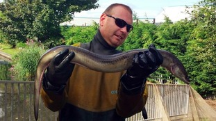 Rare eel from Bermuda discovered in West Bromwich canal