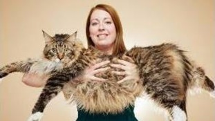 Wakefield's Ludo is the world's longest cat