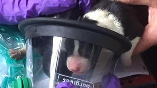 The pet-friendly oxygen masked helped to save Blaze.