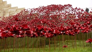 Half a million visit poppies at Lincoln Castle