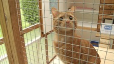 Cat found in removal van engine reunited with its owner.