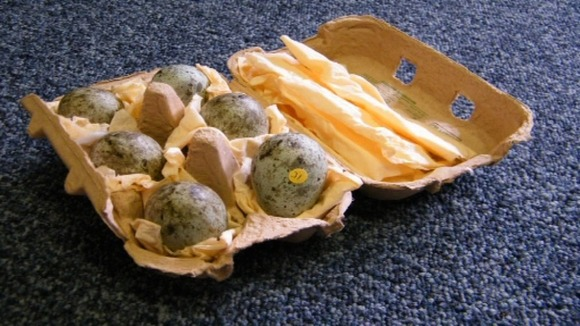Raven eggs found at the home of retired police officer Michael Upson in Suffolk