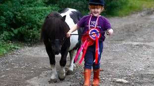 Elvis the Shetland pony has rivals 'All Shook Up' after  scooping hundreds of prizes
