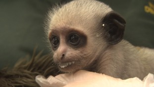 Summer of endangered babies at Paignton Zoo