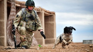 Lance Corporal Liam Tasker and Theo in action in Afghanistan