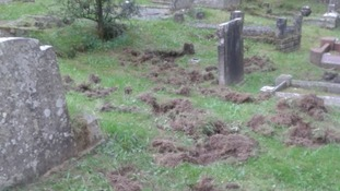 Wild boar digs up graves in the Forest of Dean