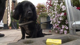 Sniffer dog highlights dangers of smuggled tobacco