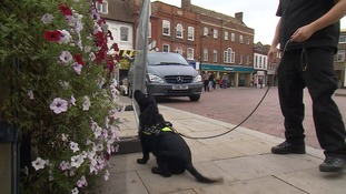 Phoebe the sniffer dog is touring Cambridgeshire to raise awareness of illegal tobacco.