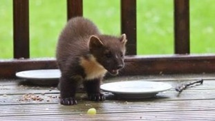 Have you spotted this cute critter in southern Scotland?