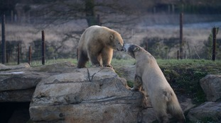 Project Polar offers bears like Nobby and Nissan 10 acres to roam around