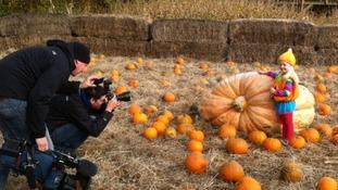 pumpkin york maze 2