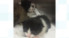 Some of the kittens found abandoned in Norfolk
