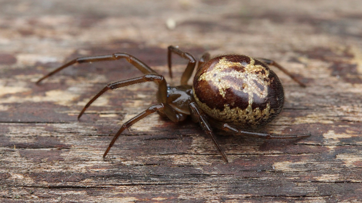 spiders central itv news