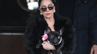 Lady Gaga with her french bulldog Asia.