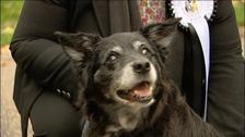 Therese Coffey's dog Rizzo