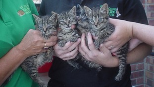 Who would throw five kittens at a train in Norfolk?
