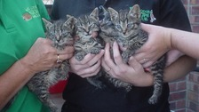Four kittens survived.