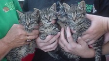 Who would throw kittens at a train? Police hunt launched