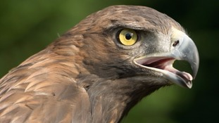Project Golden Eagle - have your say