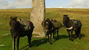 The ponies at the beginning of the walk in Dartmoor