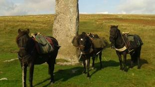 The ponies at the beginning of the walk in Dartmoor