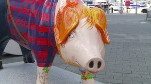 Ed Sheer-Ham is among the fibreglass pigs going up for auction.