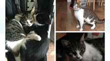 'Be vigilant' warning for cat owners after suspected poisoning