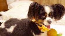 Dog in halloween bandana