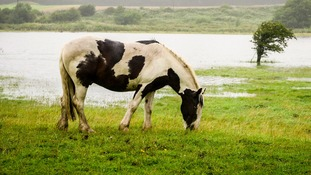Warning to motorists about horses loose on roads