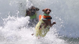 Double doggy wipe out!