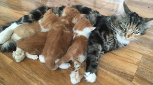 Kittens Rescued From Dry Cleaning Machine Reunited With Mother