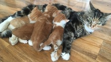 'Dry Cleaner' Kittens Reunited With Mother