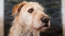 700 stray dogs collected in Cumbria this year
