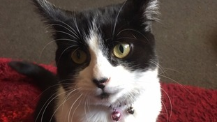 Appeal after cat's body found in Walsall
