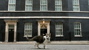 'Cats come first' in Downing Street says former deputy PM Nick Clegg