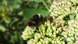 Simon's Blog - To Bee Or Not To Bee...